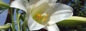 free white big flower nature facebook cover