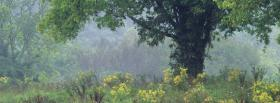 free tennessee summer nature facebook cover