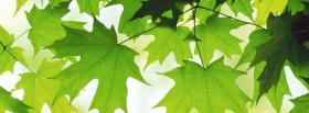 free green summer leaves nature facebook cover