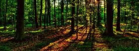 free light and forest nature facebook cover