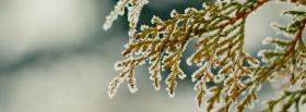 free close up branch nature facebook cover