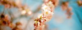 free spring nature facebook cover