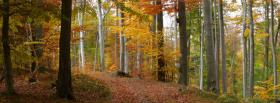 free autumn forest nature facebook cover