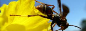 free bee and flower nature facebook cover