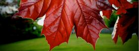 free red leafs nature facebook cover