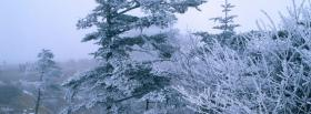 free frozen trees nature facebook cover