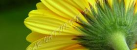 free stem flower nature facebook cover