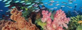 free corals fish nature facebook cover