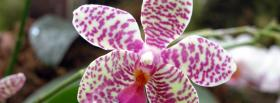 free different orchid flower nature facebook cover