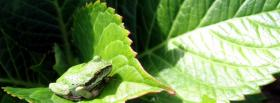 free frog and leaf nature facebook cover