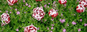 free wild flowers nature facebook cover