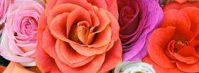 free different roses nature facebook cover