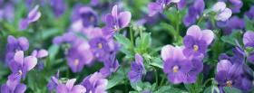 free pansies garden nature facebook cover