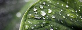 free wet leaf nature facebook cover