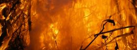 free forest on fire nature facebook cover