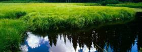 free green grass in water nature facebook cover