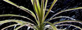 free plants and rain nature facebook cover