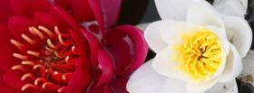 free pink and white flower nature facebook cover