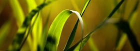 free summer grass nature facebook cover