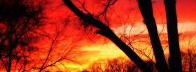 free fiery forest nature facebook cover