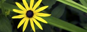 free yellow simple flower nature facebook cover
