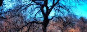 free tree no leaves nature facebook cover