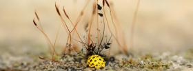 free yellow lady bug nature facebook cover