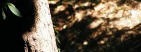 free simple tree trunk nature facebook cover