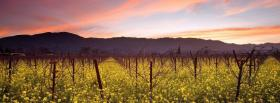 free vineyard nature facebook cover
