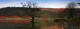 free tree autumn view nature facebook cover
