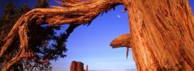 free old tree trunk nature facebook cover