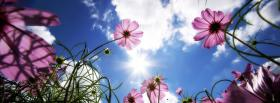 free purple spring flowers facebook cover