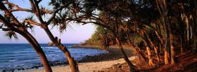 free tree branches nature facebook cover