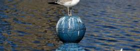 free seagull nature facebook cover