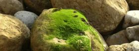 free rocks and moss nature facebook cover