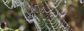 free spider web nature facebook cover