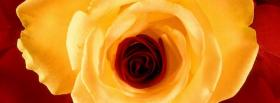 free stunning flower nature facebook cover