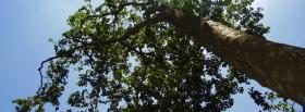 free tall green tree nature facebook cover