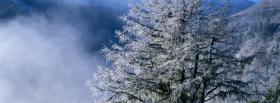 free pine tree snow nature facebook cover