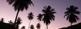 free purple sky palm trees facebook cover