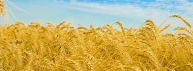 free wheat fields nature facebook cover