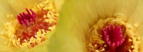 free yellow pink flowers nature facebook cover