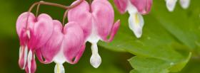 free pink white flowers nature facebook cover
