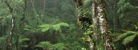 free rainforest nature facebook cover