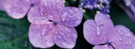 free rain purple flowers nature facebook cover