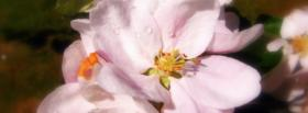 free pink delicat flowers nature facebook cover