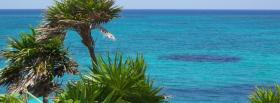 free wind and palm trees facebook cover