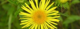 free summer flower nature facebook cover