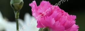 free pink nice flower nature facebook cover