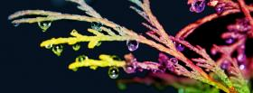 free rainbow plant nature facebook cover